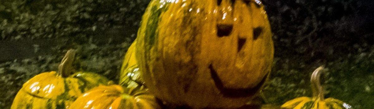 WiWö Halloween